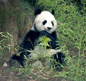 Google announced its latest Panda update, 3.4, last week through the company's Twitter account.