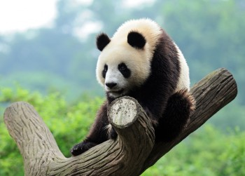 Google rolled out a minor Panda update on Tuesday morning, with the iteration likel