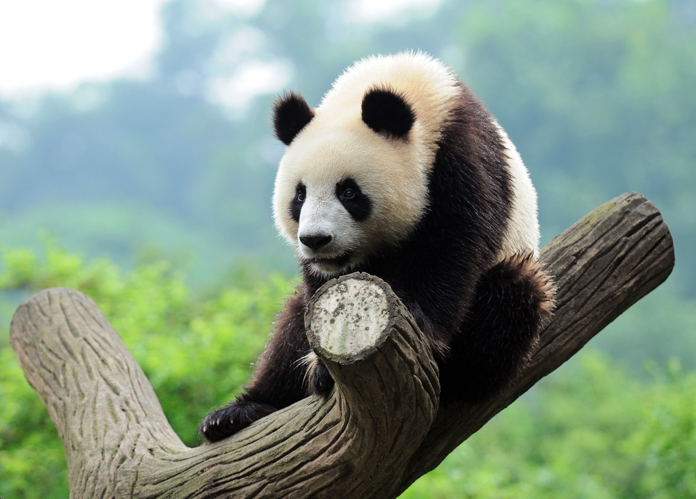 Google confirmed recent SERP shakeups are due to a Panda update.