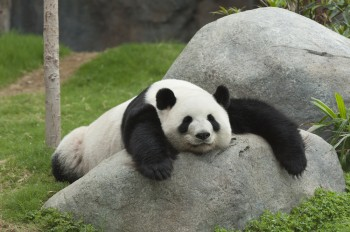 Panda refresh 22 has been confirmed and it affected 0.8 percent of English queries.