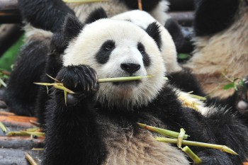 Google introduces Panda 23 just before the final holiday sales push.