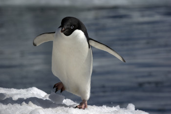 Marketers are bracing themselves (and their link profiles) for the impact Penguin 2.0 will have on SEO.