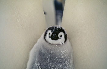 Google recently announced Penguin 1.2, the latest version of its spam-fighting technology.