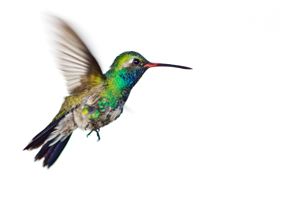 Google's new hummingbird algorithm ranks content based on its ability to answer long-form, complex questions.