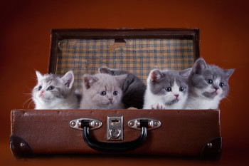 Uber manages to tie together mobile and local marketing with kittens.