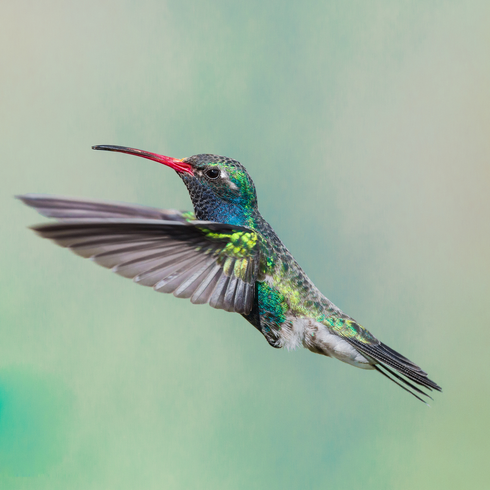 Google's Hummingbird algoritm