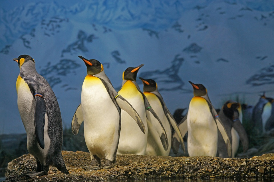Penguin 4.0 is here. And now it's baked right into Google's main algorithm.