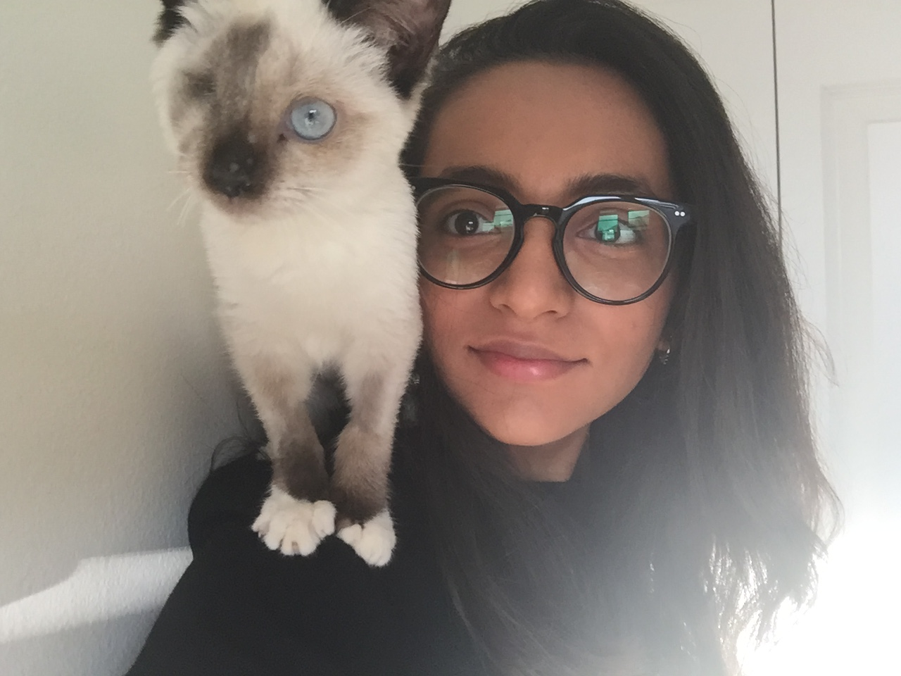 Senior Designer Maysoon acts as a perch for her stunning cat, Christopher.