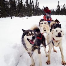 Social media marketing and sled dogs, why not?